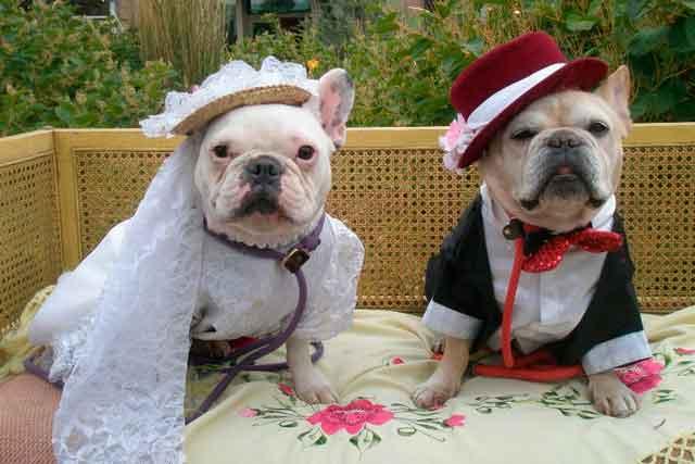 В Італії собакам заборонили нести весільні каблучки