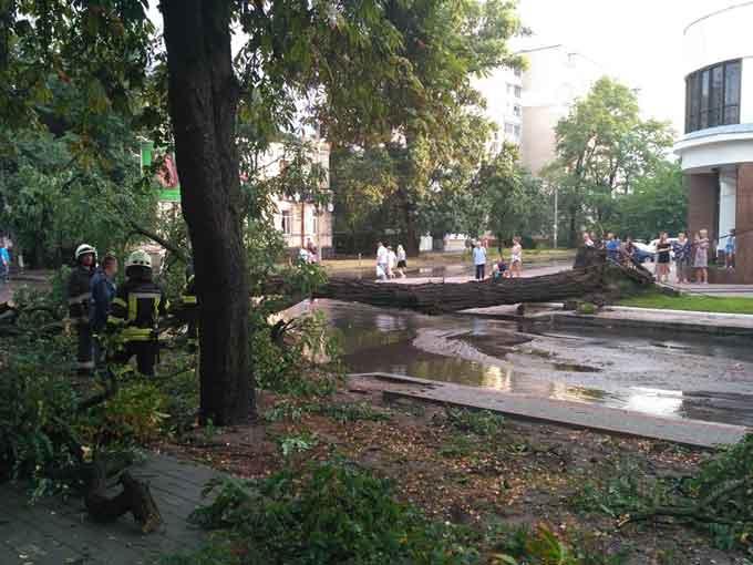 У Черкасах на дорогу попадали дерева (фото, відео)