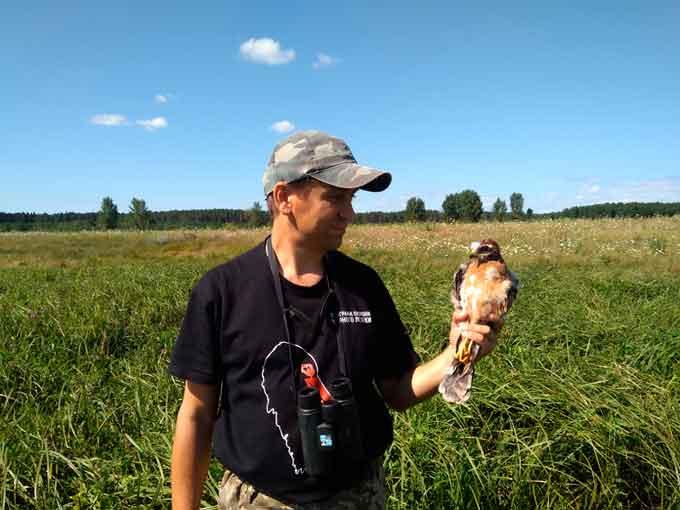 Винятковий птах почав гніздитися на Черкащині (фото)