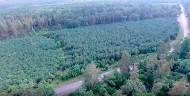 Катастрофічне всихання черкаського бору зафіксував безпілотник (відео)