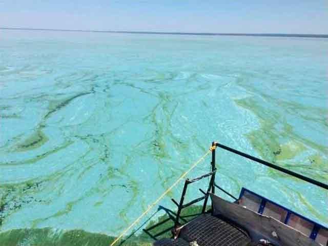 Канівське море зацвіло бірюзово-зеленими фарбами (фото)