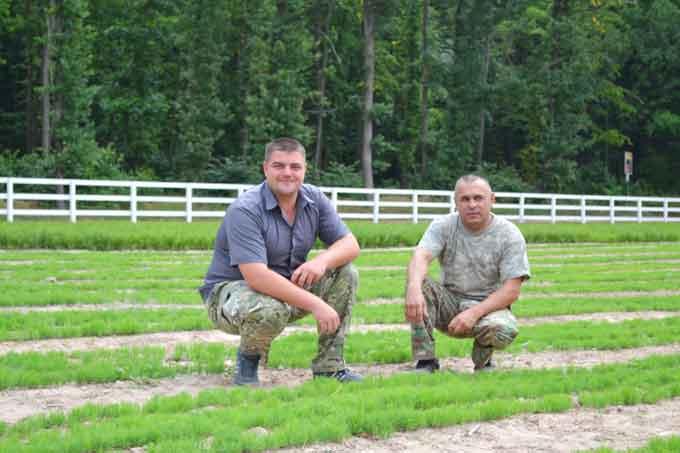 Півмільйона сіянців дубу та сосни вирощують мліївські лісівники у розсаднику