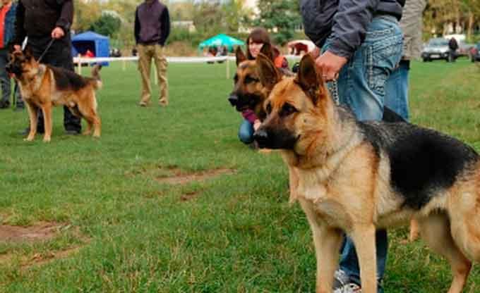 Черкасці хочуть, щоб у парку Хіміків зробили майданчик для вигулу собак