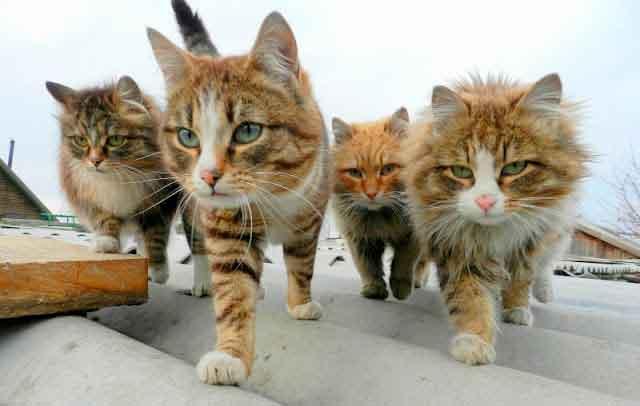 У Тальному проведуть щеплення собак та котів проти сказу