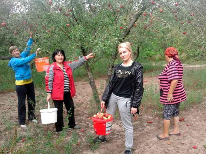 Меценат подарував яблука людям похилого віку