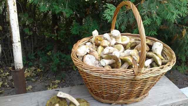 «Біопаливо майбутнього»: пальне з грибних відходів зможе повністю замінити бензин