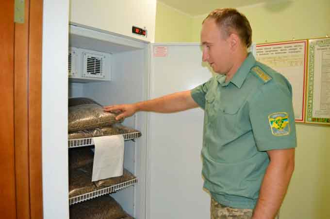 Чигиринські лісівники зберігають лісове насіння у сучасній холодильній камері