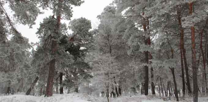 Черкаський окружний адміністративний суд прийняв рішення на користь забудовника заповідного лісу