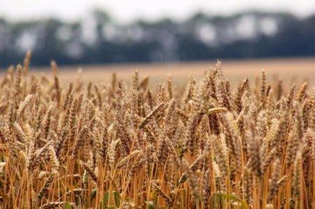 Олександр Мигловець: «Аграріям саме час подбати про перший крок до отримання рекордних врожаїв»