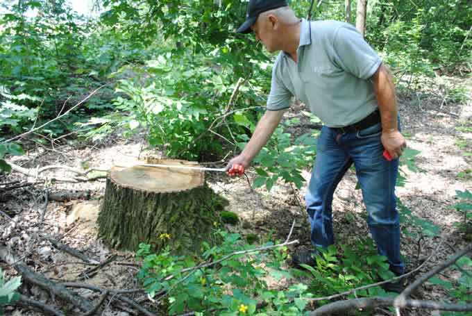 У Степанецькій громаді впіймали «на гарячому» крадіїв лісу