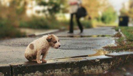 Акції зі збору коштів для допомоги безпритульним тваринам пройшли у черкаських вишах