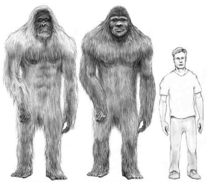 На думку дослідників, «Гоша» був нащадком гігантопітеків – велетенських людиноподібних істот, які за всіма науковими теоріями повинні були давно вимерти разом з мамонтами, але мали нахабство вціліти у віддалених районах Паміру