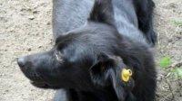 Черкащина нарешті перейшла до масового вирішення питання безпритульних тварин гуманними методами