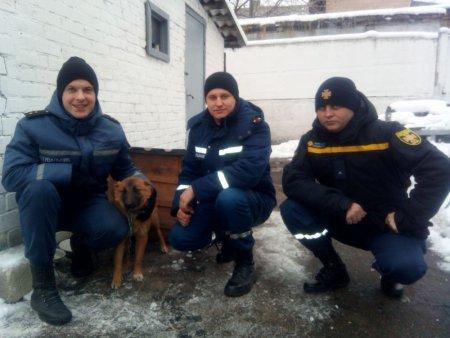 Під закінчення року Собаки черкаські герої-рятівники завели живого талісмана