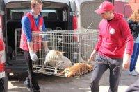 Всесвітньо відомий фонд «4 лапи» допоможе Черкащині  вирішувати проблему безпритульних тварин