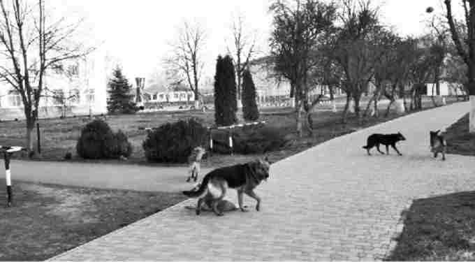 У Шполі біля міської школи зграя собак лякає дітей