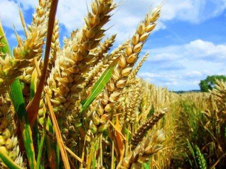 Як уберегти врожай зернових? – радить фахівець