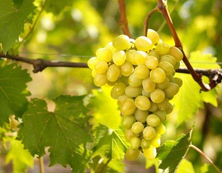Як черкаським аграріям захистити цього року урожай?