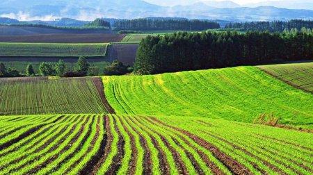 Як змінить Черкащину відкриття ринку землі?