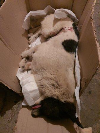 Головного ветеринара Катеринопільщини звинувачують у тому, що вбив собаку
