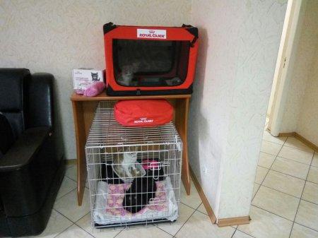 У Черкасах відкрився Центр прилаштування тварин «Добрі руки»