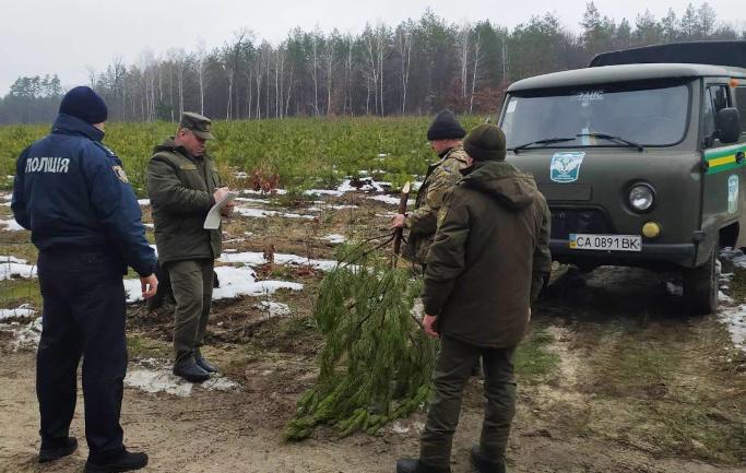У Виграївському лісництві затримали «ялинкового порушника» (фото)