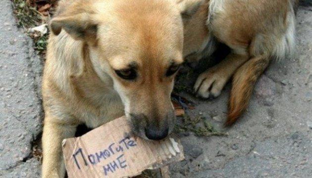Жителя Звенигородського району судитимуть за жорстоке знущання над безпритульною собакою
