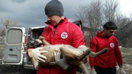 На Черкащині розпочав роботу Міжнародний благодійний фонд «Four Paws International»