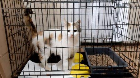 Понад 3000 гривень зібрали у ЧНУ для порятунку безпритульних тварин