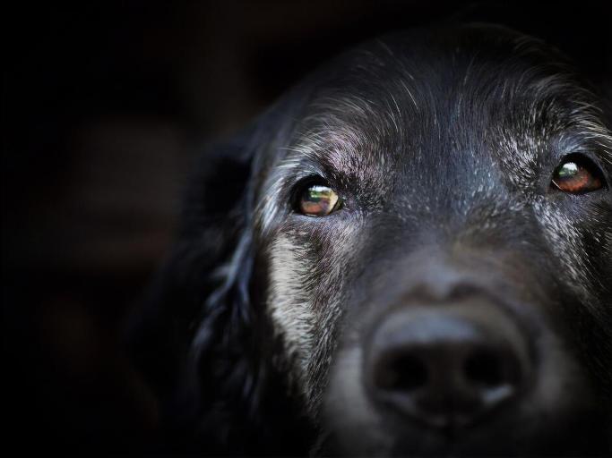 У Черкасах судитимуть місцевого жителя, який викинув собаку з вікна квартири