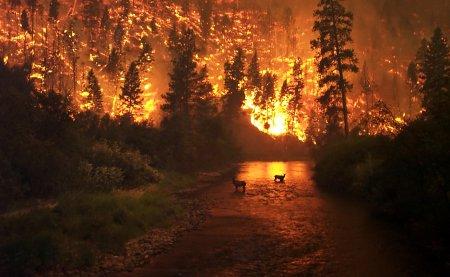 Черкасців застерігають берегтися від пожеж  у останній день червня