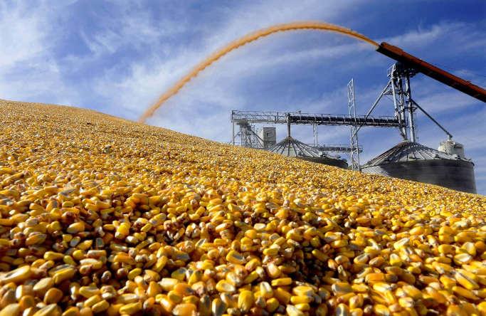 У Смілі судитимуть фермера, який намагався зібрати врожай кукурудзи з чужого поля