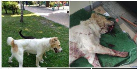 В Умані біля дитсадка із рушниці серед дня убили собаку