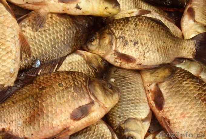 Масової загибелі риби немає - Черкасирибоохорона