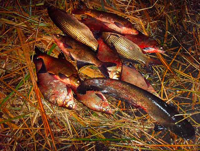 У Каневі чоловіку оголошено підозру у незаконному вилові риби