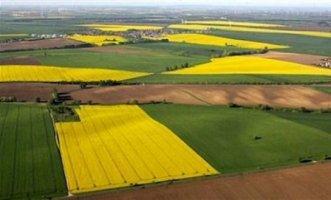 На Черкащині 90 % власників сільськогосподарських підприємств є депутатами різного рівня рад