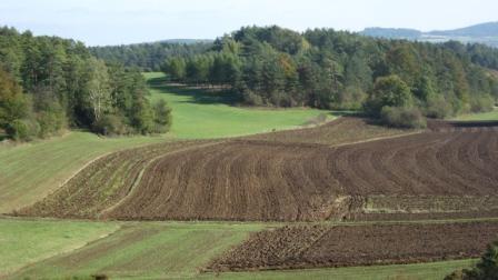 На Кам'янщині фермери самовільно зайняли землі вартістю 5 млн. грн