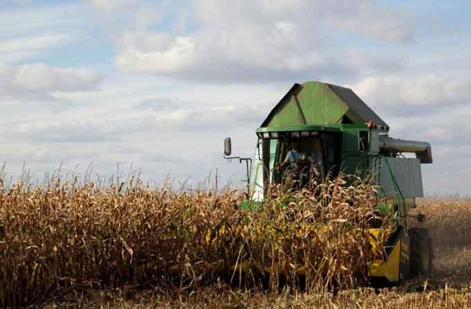 На Черкащині намолотили 1,8 млн тонн кукурудзи